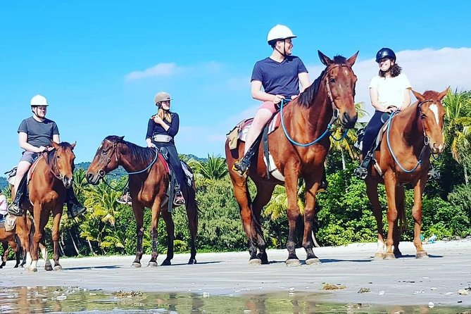 Mid-Morning Beach Horse Ride in Cape Tribulation with Pick Up - Attractions Sydney