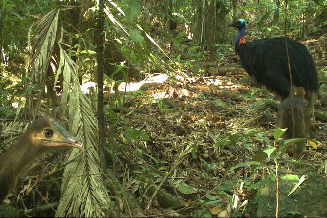 Small-Group Trekking Experience in Daintree National Park - Attractions Sydney