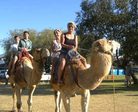 Calamunnda Camel Farm - Attractions Sydney