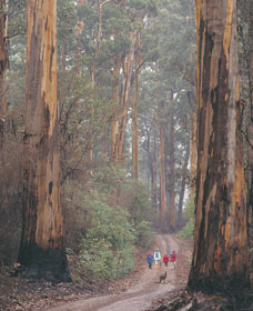 Beedelup National Park - Attractions Sydney